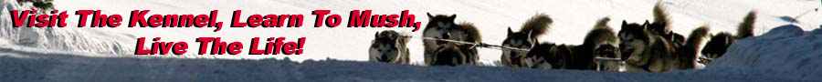 Quinault Alaskan Malamutes - Run For The Red Lantern